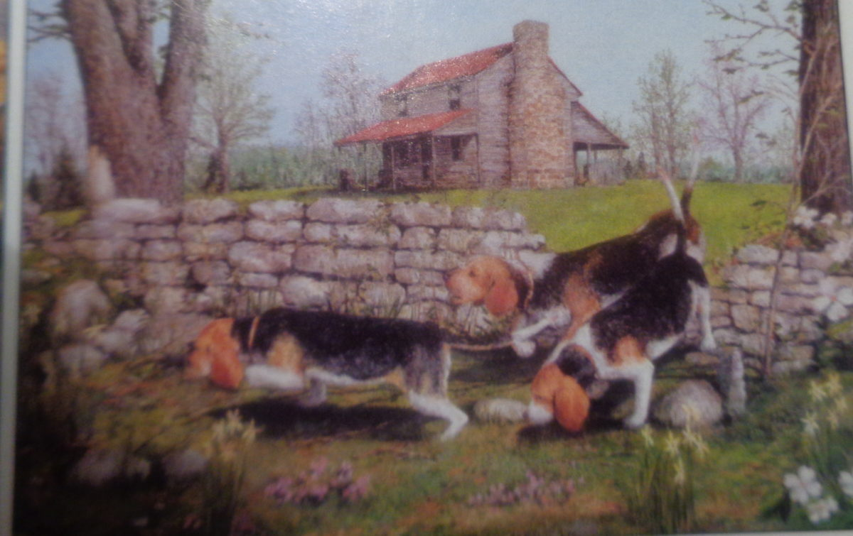 Johnston's Beagle Farm